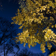 Autumn tree in the night — Stock Photo
