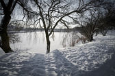 Small lake in the park during winter — Stock Photo