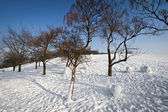 Winter trees in the park — Stock Photo