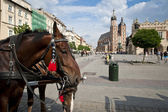 Horses on Old Town square in Krakow, Poland — Stock Photo