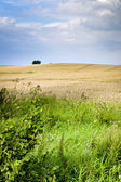 Ecological countryside landscape — Stock Photo
