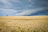 Ecological landscape with storm — Stock Photo