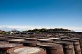 Botti di whisky — Foto Stock