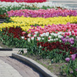 Colorful tulips rows - flowerbed in city park — Stock Photo #5822416
