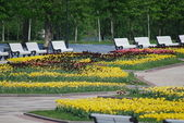 Outdoor - city park in Moscow at the spring and summer — Stock Photo