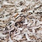 Dried seaweed texture in macro — Stock Photo #5831555