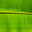 Stock Photo: Bananleaf