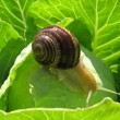 Snail crawling — Stock Photo #5986095