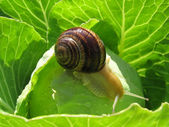 Snail crawling — Stock Photo