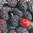 Stock Photo: Black mulberry