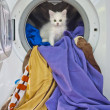 Stock Photo: Cat in washing machine