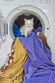 Cat in the washing machine — Stock Photo