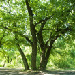 Green trees in park and sunlight — Foto de Stock
