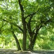 Стоковое фото: Green trees in park and sunlight