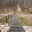Long stairs in forest — Stock Photo