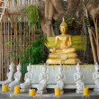 Golden Buddha under a Bodhi tree — Stock Photo