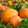 Pumpkins on field — Stock Photo #6011021