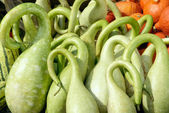 Ornate bright green pumpkins — Stock Photo