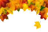 Autumn leaves building a bow-shaped border — Stock Photo