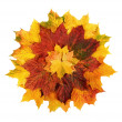 Royalty-Free Stock Photo: Colorful autumn leaves arranged in a flower shape