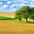 Colorful rural landscape with single tree — Stock Photo