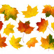 Set of colorful autumn leaves — Stock Photo