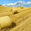 Open farmland — Stock Photo
