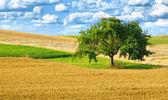 Colorful rural landscape with single tree — Foto de Stock