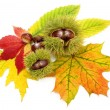 Arrangement with autumn leaves and chestnuts — Stock Photo