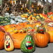 Cute arrangement of lots of pumpkins — Stock Photo