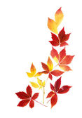 Neat arrangement of autumn leaves — Stock Photo