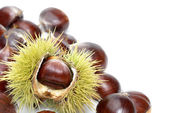 Fresh sweet chestnuts on pure white — Stock Photo