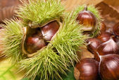 Fresh neat chestnuts on fallen leaves — Stock Photo