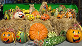 Cute arrangement of painted pumpkins — Stock Photo