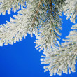 Winter pine — Stock Photo #5622441