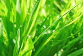 Green grass abstract background — Stock Photo