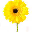 Yellow flower isolated over — Stock Photo