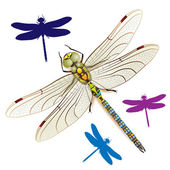 Dragonfly — Stock Vector
