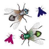 комнатная муха — Cтоковый вектор
