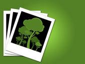 Bäume im rahmen — Stockfoto
