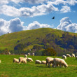 Royalty-Free Stock Photo: Farmland - New Zealand
