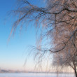 Winter beauty -  nature — Stock Photo