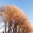 Winter tree — Stock Photo #6537707
