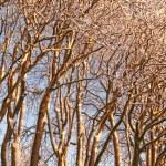 Winter tree at sunset — Stock Photo