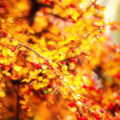 Autumn leaves and flowers - Stock Photo