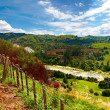 Rolling hills - New Zealand — Stock Photo