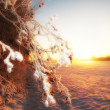 Winter sunset and snow — Stock Photo