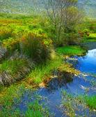Wild landscape — Stock Photo