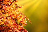 Autumn leaves and flowers — Stock Photo