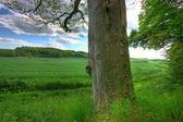 Frondoso bosque — Foto de Stock